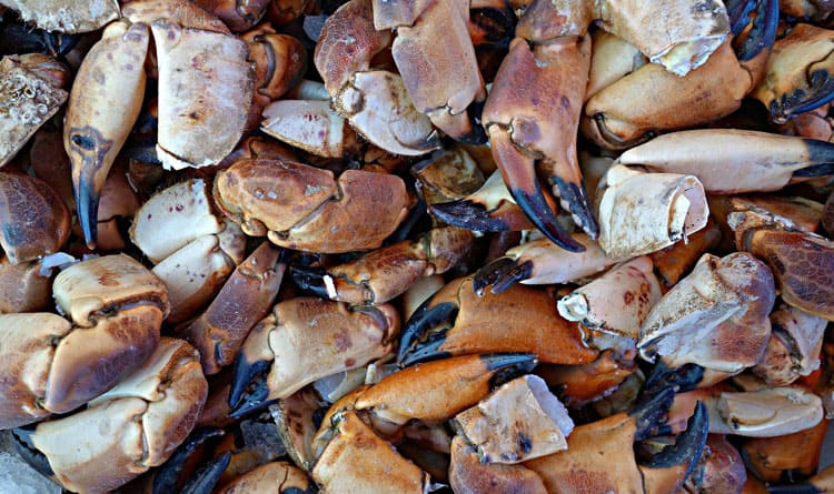 What is the Difference Between White and Brown Crab Meat