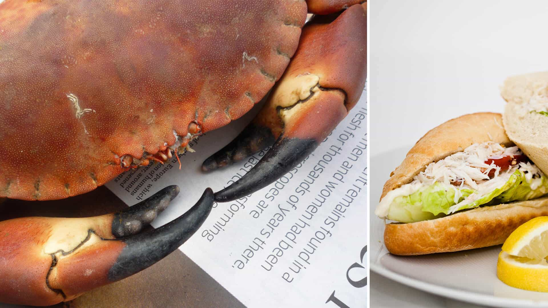 Top 5 reasons why eating crab is good for you salcombe for What fish is good for you